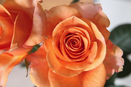 薔薇(変換前)