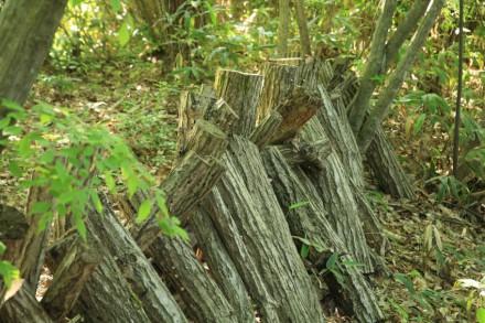 椎茸栽培用の原木