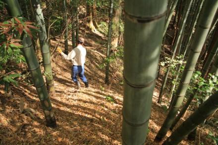 急斜面な竹やぶを降りる