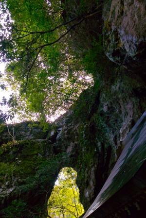 岩と木に覆われてる