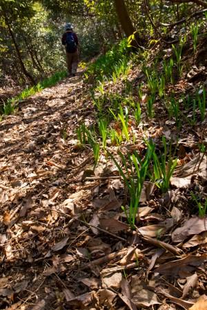 登山道にも春の気配
