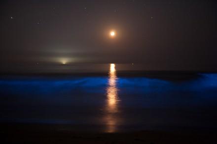 沈みゆく三日月と夜光虫