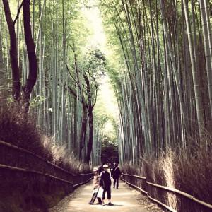 竹林と修学旅行の子どもたち2