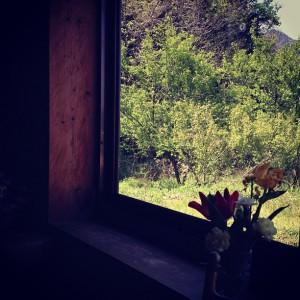 窓から見える緑