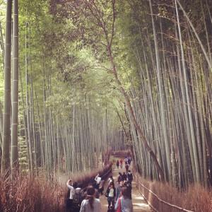 嵐山・龍安寺付近の竹林