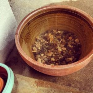 鉢に水と砂利を入れて置いておく