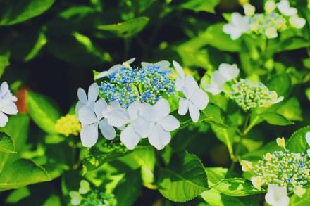 写真 2015-06-30 1 31 58