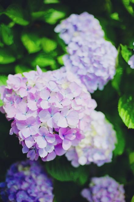 写真 2015-06-30 1 31 53